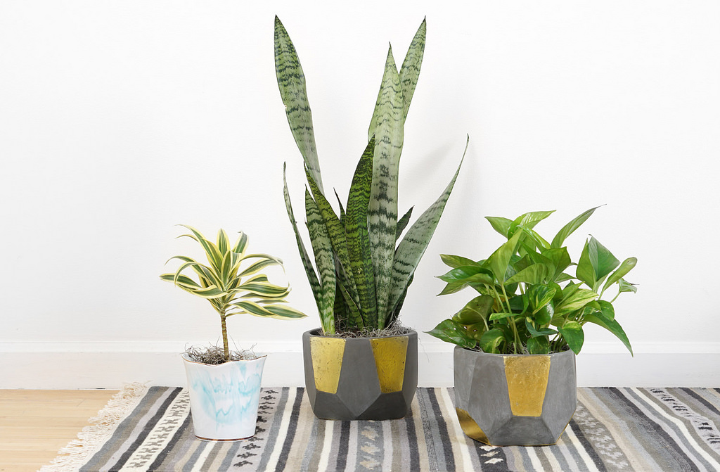 Why You Should Fill Your Home with Houseplants